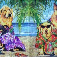 Rare Aloha Dogs / Cats cocktail