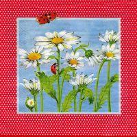 Ladybugs red