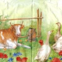 Rare Farm animals