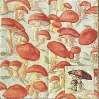 Rare Mushrooms