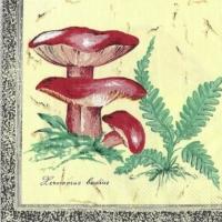 Rare Mushrooms and Oak